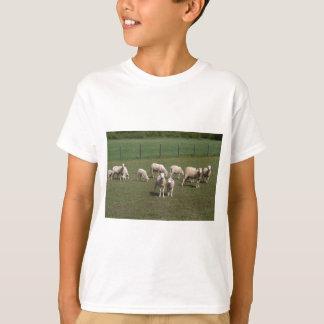Camiseta Manada de ovejas
