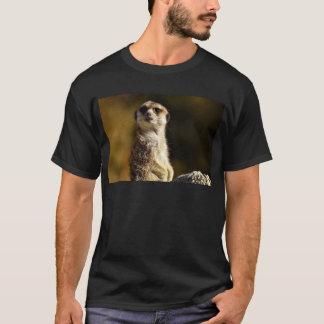 Camiseta Meerkat