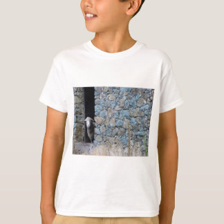 Camiseta Oveja Corsa