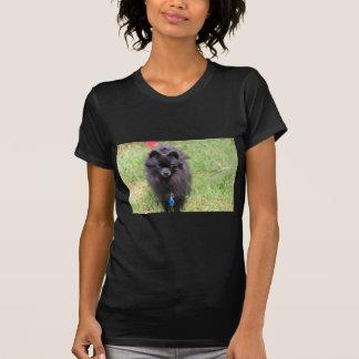 Camiseta Pablo el Pomeranian
