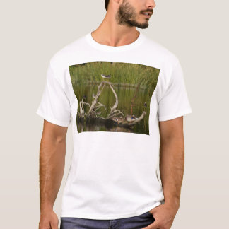 Camiseta pájaros