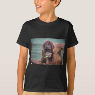 Camiseta parque zoológico