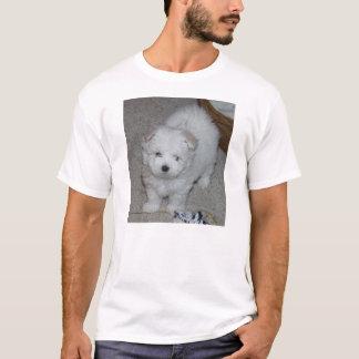 Camiseta perrito maltés