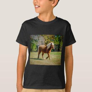 Camiseta Potro de Shetland bonito