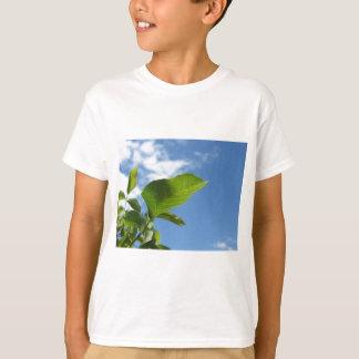 Camiseta Primer de la hoja de la nuez encendido por la luz