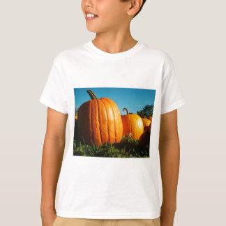 Camiseta Pumpkins_Hancock_Shaker_village_2418