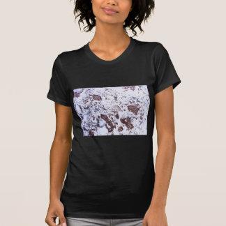 Camiseta Roca fósil
