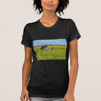Camiseta Vaca con los becerros que pastan en prado con los