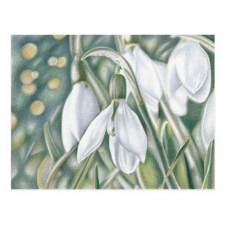 Campanilla de invierno - dibujo de lápiz de color postal
