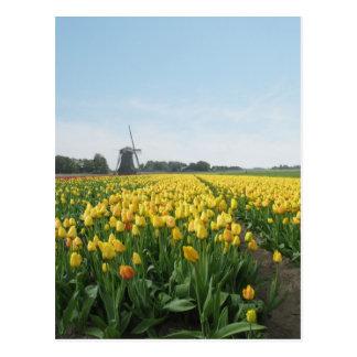 Campo de flores del tulipán y molino de viento postal