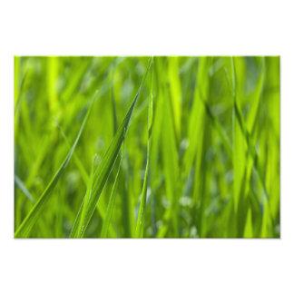 Campo de hierba verde fotografías