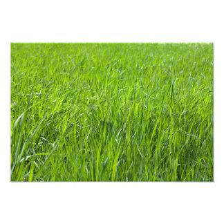 Campo de hierba verde impresiones fotográficas