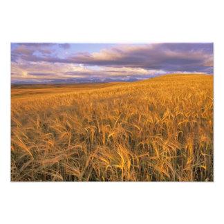 Campo de la cebada de maduración a lo largo de Roc Fotografias