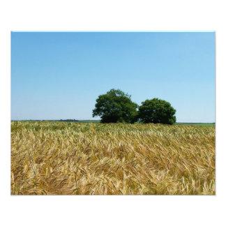 Campo de la cebada en la fotografía de Cornualles Impresion Fotografica