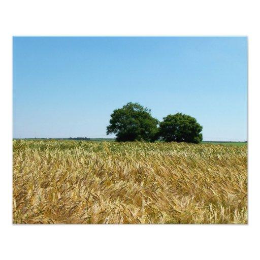 Campo de la cebada en la fotografía de Cornualles Impresiones Fotograficas