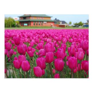 Campo de los tulipanes postal