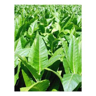 Campo de tabaco tarjetones