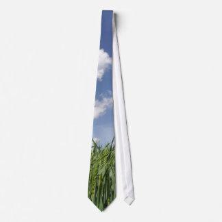 Campo del maíz joven corbata