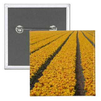 Campo del tulipán, los Países Bajos Pins
