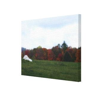 Campo en naturaleza del otoño