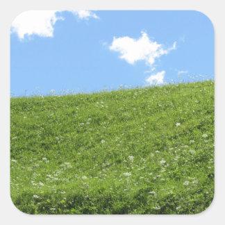 Campo herboso en la colina del balanceo contra el pegatina cuadrada