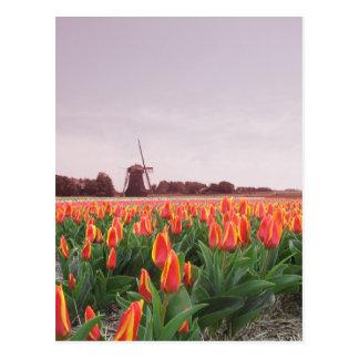 Campo y molino de viento Holanda del tulipán de la Postal