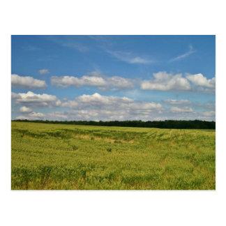 Campos de trigo postal