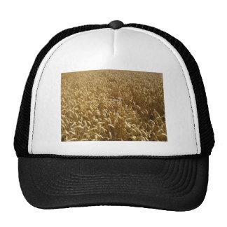 campos del verano gorra