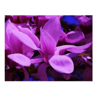 Campos florales púrpuras elegantes tarjeta postal