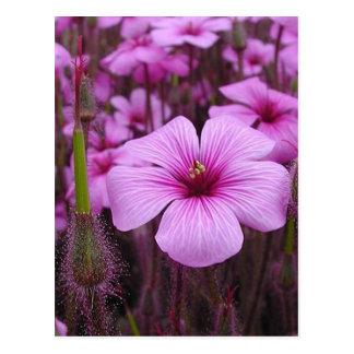Campos florales púrpuras elegantes postales