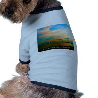 Canal Camiseta De Mascota