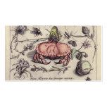 Cangrejo, Botanicals, insectos, y flores del vinta Tarjeta De Visita