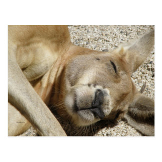 Canguro QLD Australia el dormir de la postal