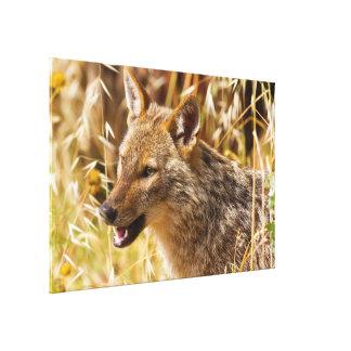 Canis de oro del chacal aurífero impresiones en lona estiradas