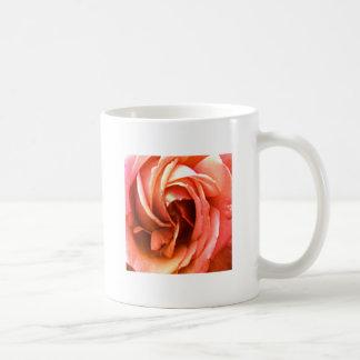 Cantorbery color de rosa los regalos de Zazzle del Taza