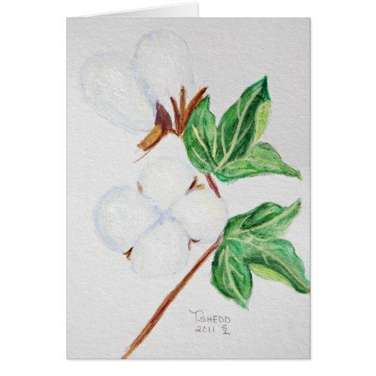 Cápsula del algodón botánica tarjeta