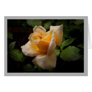 Capullo de rosa amarillo retroiluminado tarjeta de felicitación