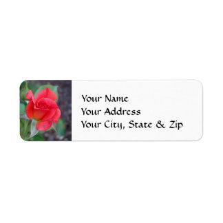 Capullo de rosa coralino etiquetas de remite