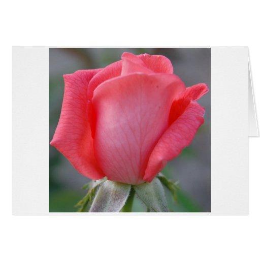 Capullo de rosa de la paz felicitacion
