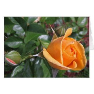 Capullo de rosa del melocotón tarjetón