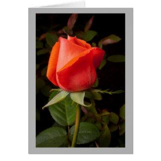 Capullo de rosa del rojo de la tarjeta del día de