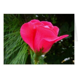 Capullo de rosa en verde tarjeta de felicitación