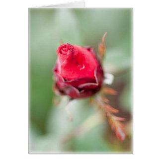Capullo de rosa rojo tarjeta de felicitación