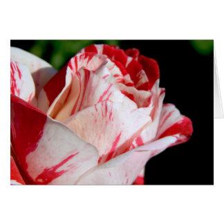 Capullo de rosa rojo y blanco tarjeta de felicitación