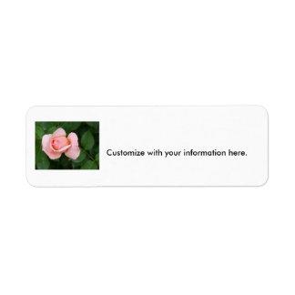 Capullo de rosa rosa claro apenas que se abre etiquetas de remite
