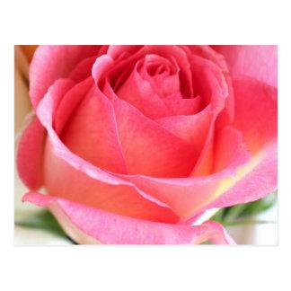 Capullo de rosa rosado 2 postal