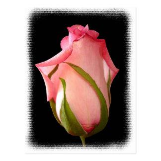 Capullo de rosa rosado con la frontera de lujo postal