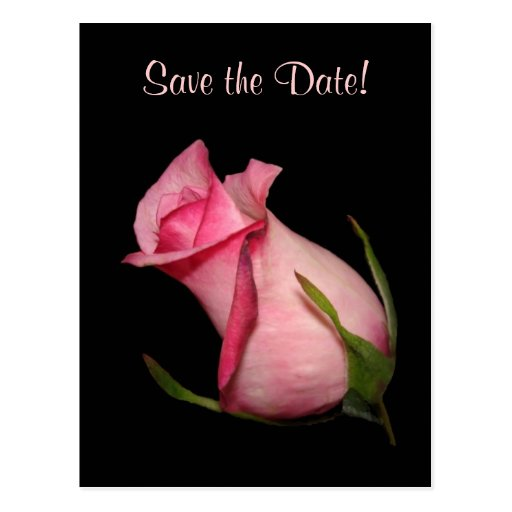 Capullo de rosa rosado (inclinado) tarjetas postales