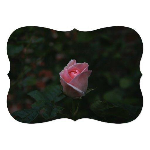 Capullo de rosa rosado comunicado