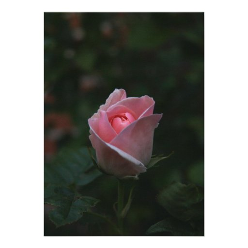 Capullo de rosa rosado comunicado personalizado